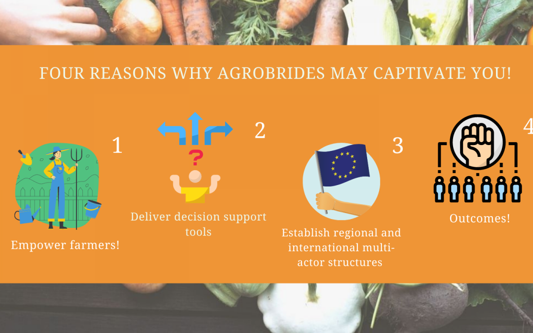 Four reasons why agroBRIDES may captivate you!