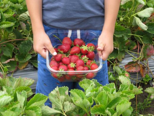 Self-Picking of Berries